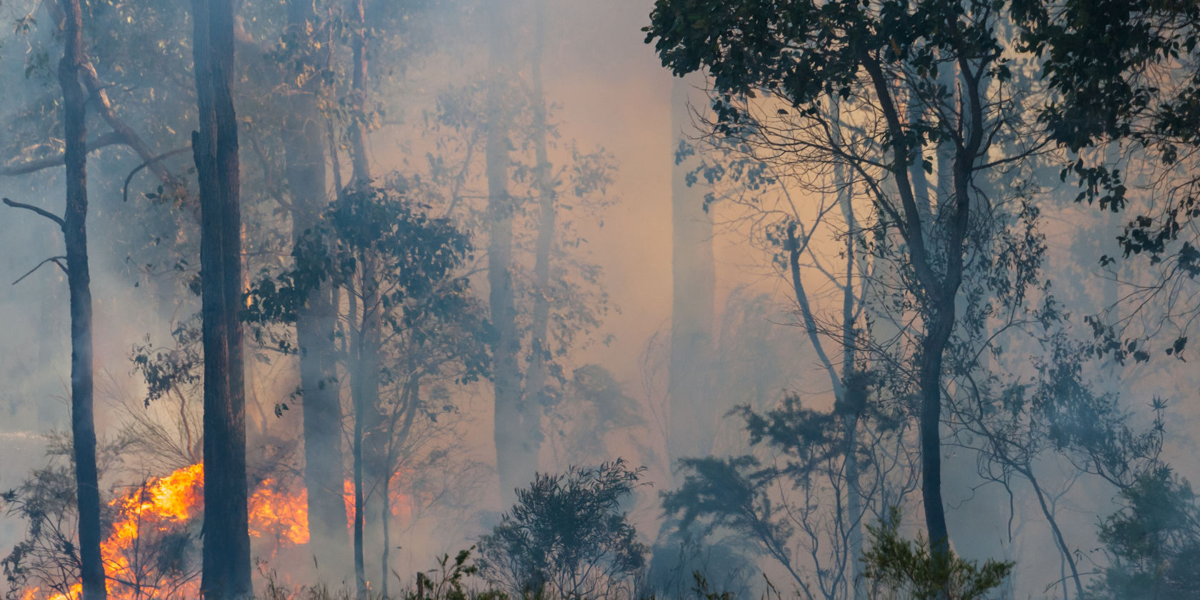Financial assistance package to help bushfire affected customers