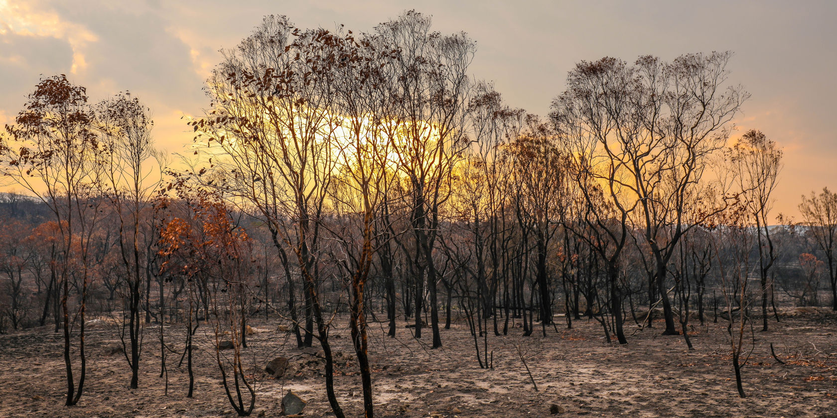 Suncorp assisting bushfire-affected customers across Australia