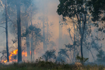 Suncorp issues financial assistance package for customers impacted by bushfires